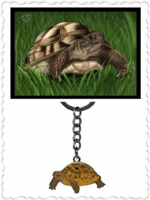 Tortoise card and Metal Keyring